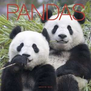 2011 Animal Calendars Pandas   16 Month   30x30cm