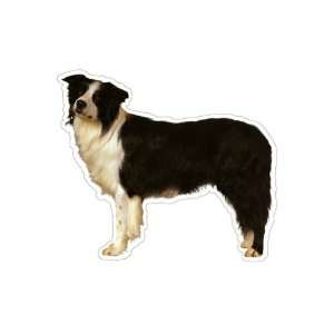 BORDER COLLIE   Dog Decal   sticker car window lover